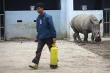 Rhinoceros are endangered
