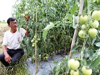Farmers cheated by inferior Chinese seeds