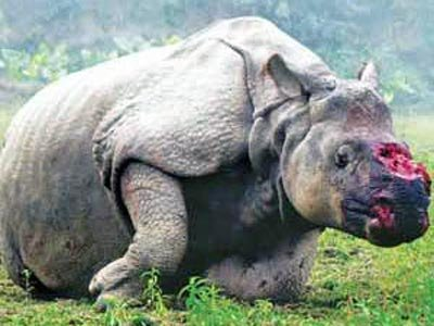 rhino-no-horn