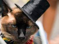 Restaurants serve cat as snacks
