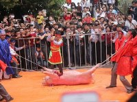 Pig slaughtering at festival
