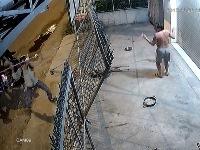 Dog thief