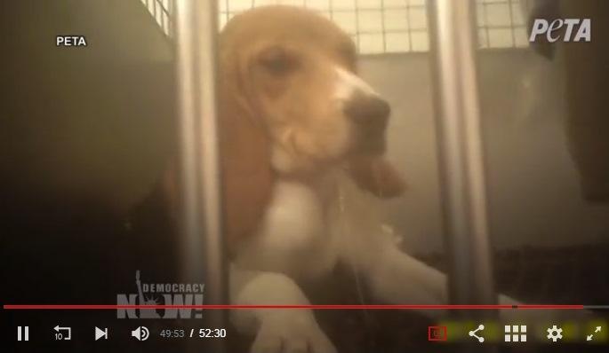 Inhumane experimentation on dog