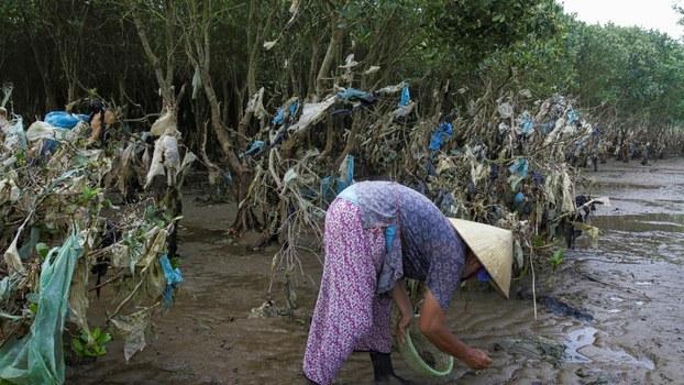Waste in mangrove